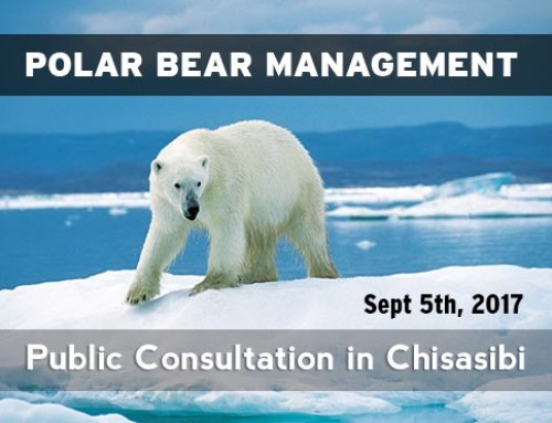 Polar Bear Management – Public Consultation in Chisasibi