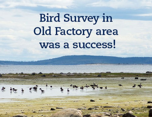 Bird Survey in Old Factory area was a success!